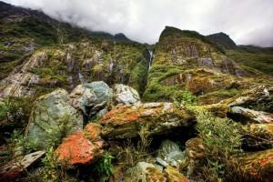 forets-nouvelle-zelande