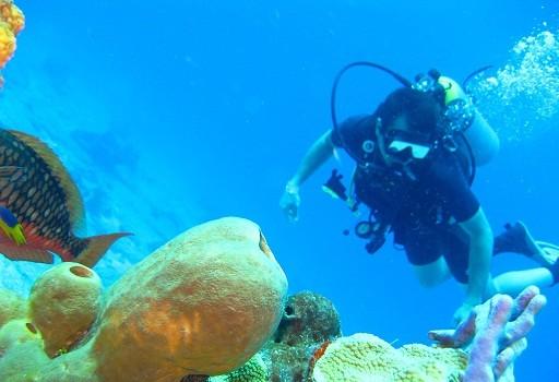 Tahiti et Moorea, des destinations de plongée incontournables en Polynésie
