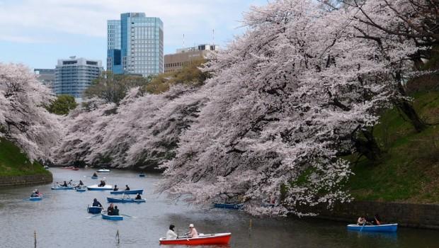Passer un séjour à Tokyo, la destination incontournable du Japon