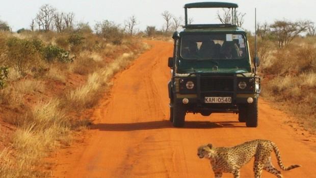 2 conseils pratiques pour profiter d'un fabuleux safari au Kenya